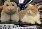 brother cream hong kong cat