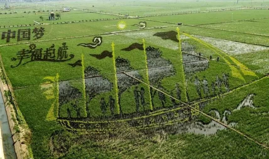 china rice paddy fields