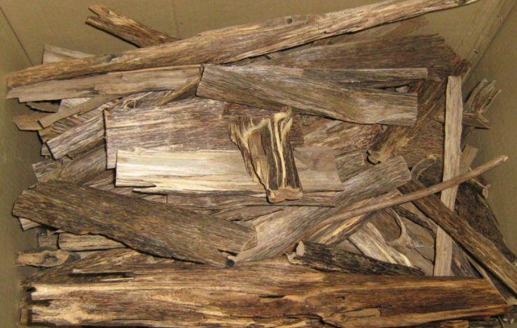 incense oud aquilaria sinensis