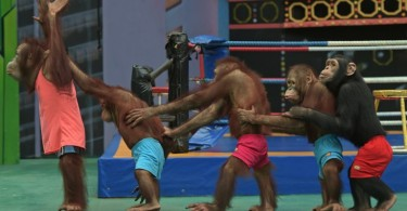thailand boxing animal