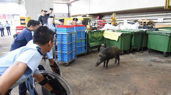 animal vs police