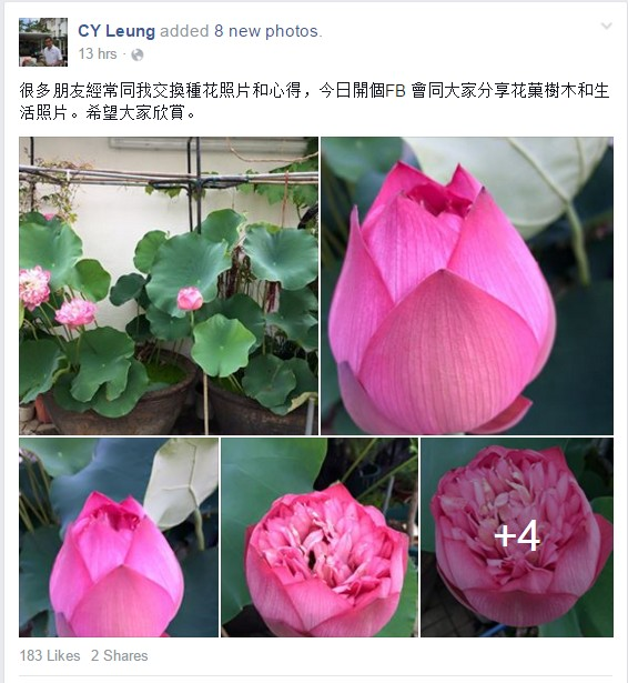 cy leung flower pics