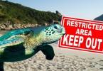 lamma sea turtle