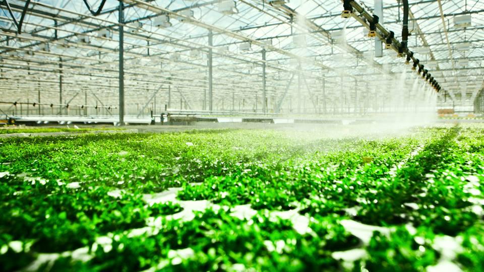 hydroponics hong kong