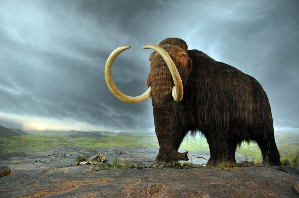 Woolly mammoth clone