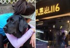 bus guide dog