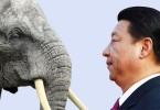 xi jinping elephant