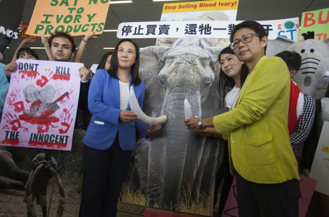 ivory rally