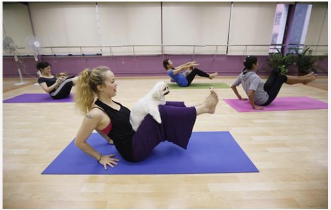 dog yoga in hong kong