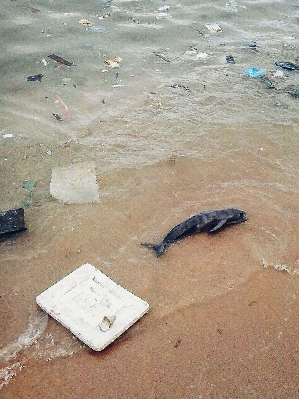 dead porpoise in cheung chau