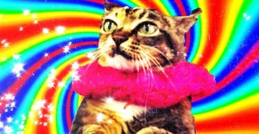 wanchai cat