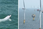 pink dolphin wind farm