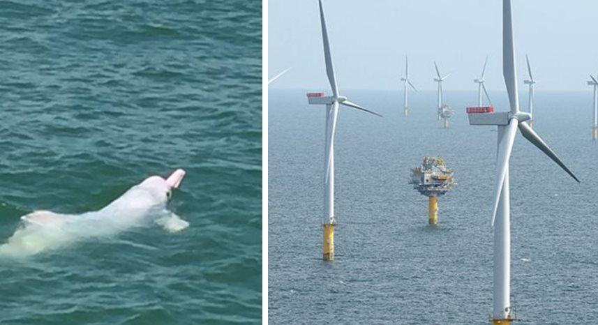 pink dolphin wind farm