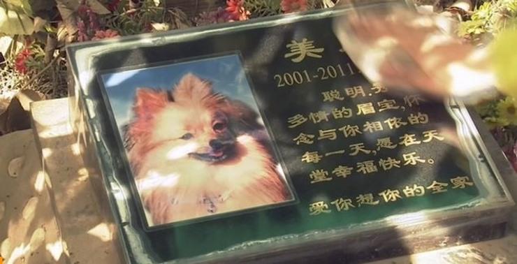 pets ching ming