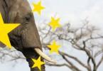 elephant tusk