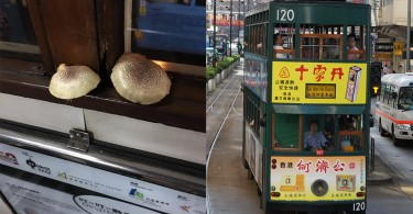 The two mushrooms; a Hong Kong tram.