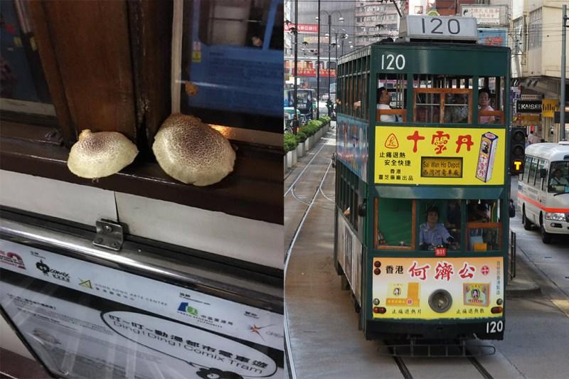 The two mushrooms; a Hong Kong tram.