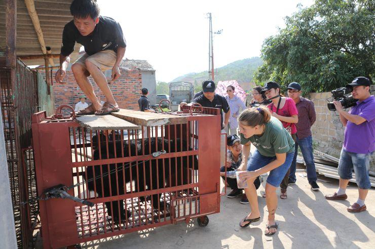 animal transport cage
