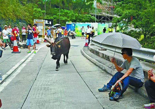 Keung Shan Road protest