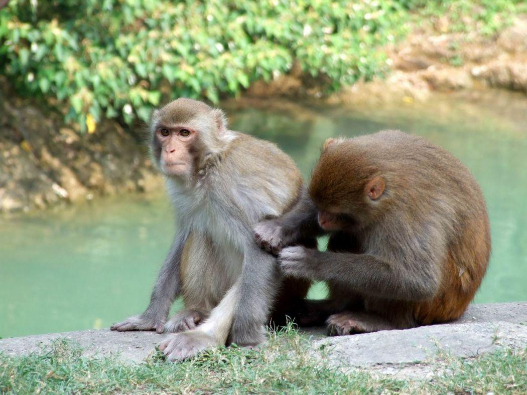 Monkeys Kam Shan Country Park
