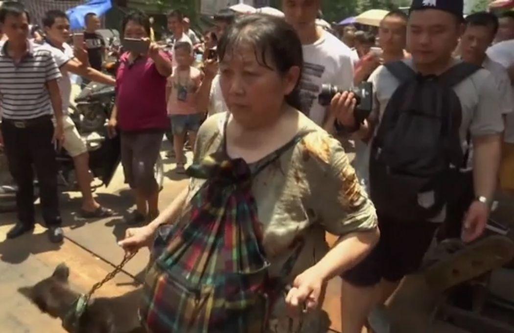 animal activist yulin