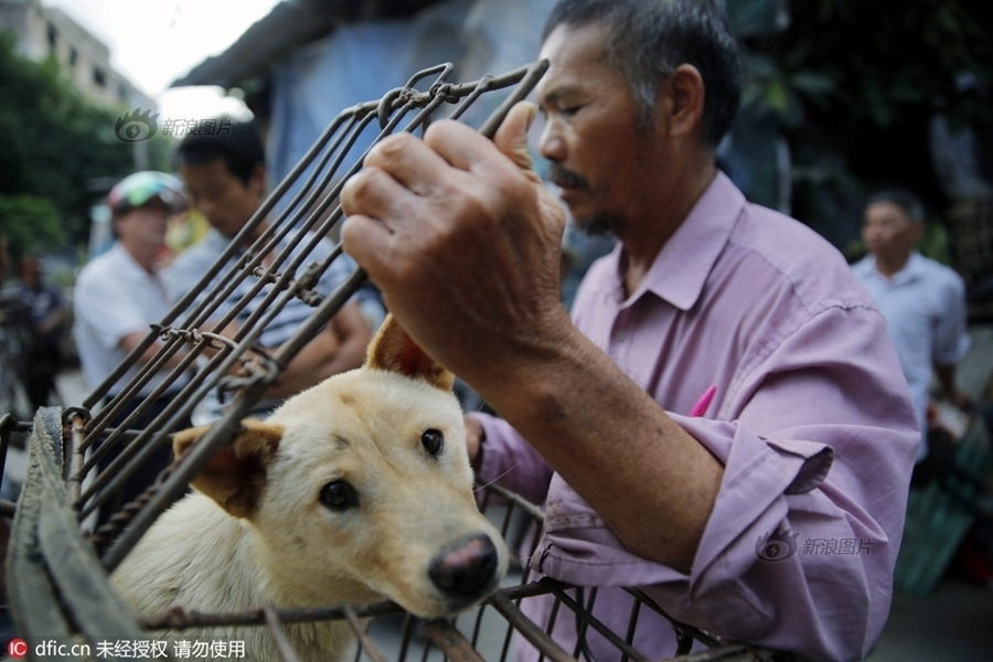 dog meat eating