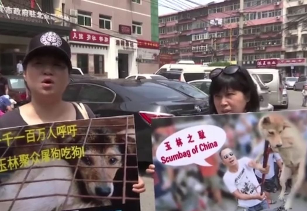 animal activists yulin