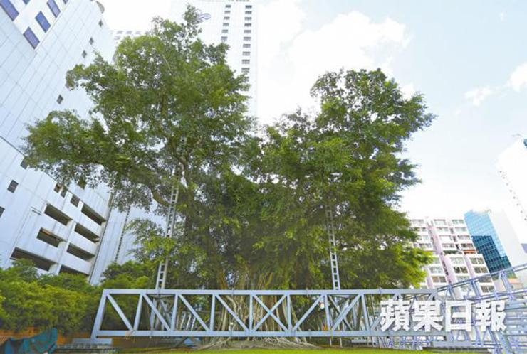 King Banyan Kowloon Park