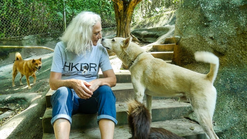 Regulate or end pet trade? Hong Kong animal lovers divided