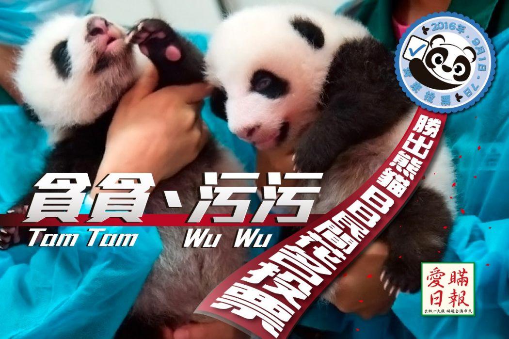 Macau Panda Nicknames