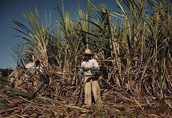 sugar cane worker puerto rico