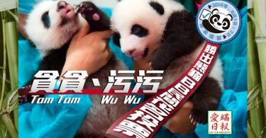 macau pandas nickname