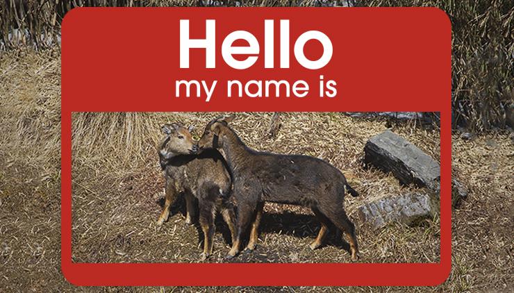 scientific-name-animals-poaching