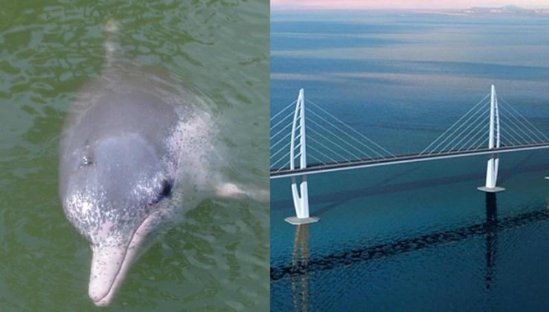 dolphin bridge