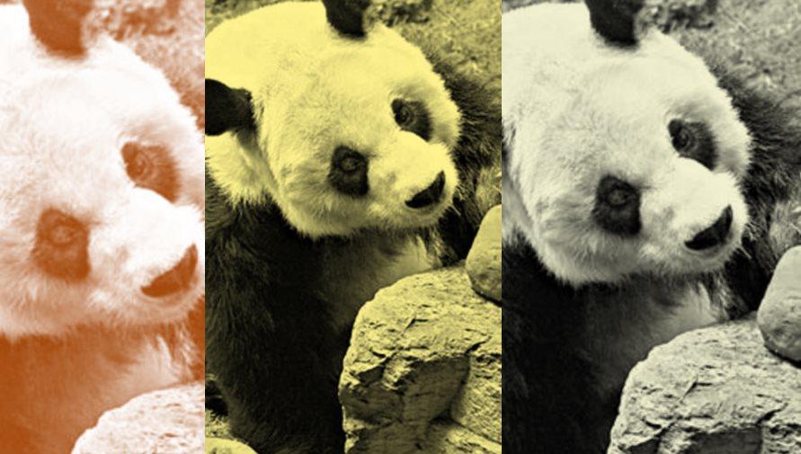 panda hkfp