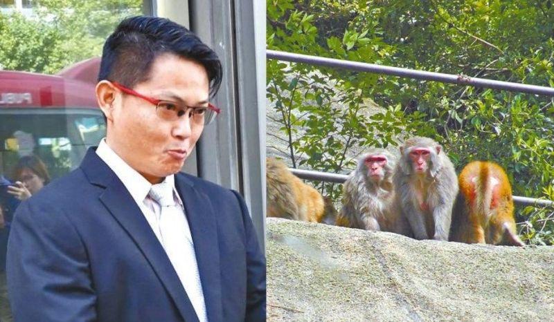Monkey Maverick Tang Ching-yin
