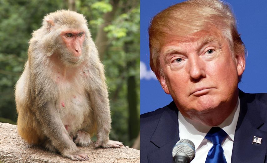 Chinese monkey picks Trump for US president | Hong Kong