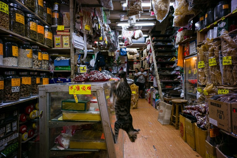 cat hong kong shop