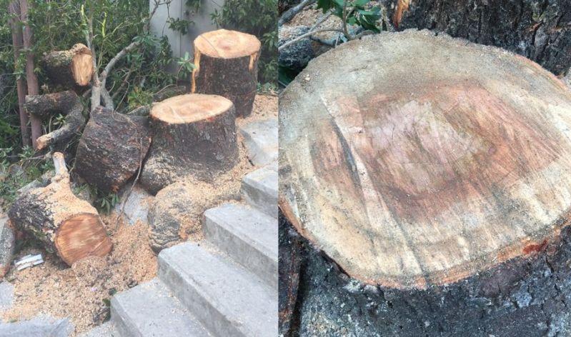lamma tree