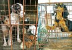dog breeding puppy mill