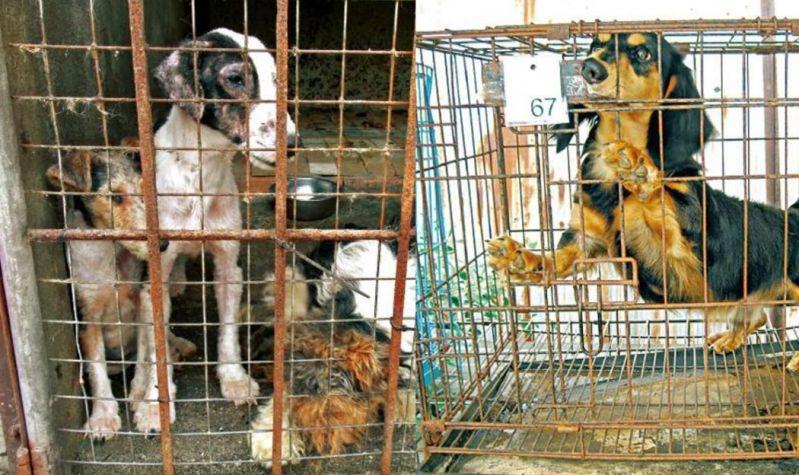 dog breeding puppy mill