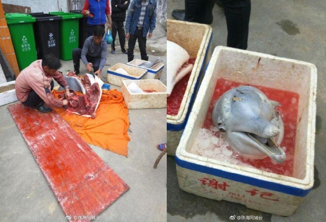 dolphin Zhuhai
