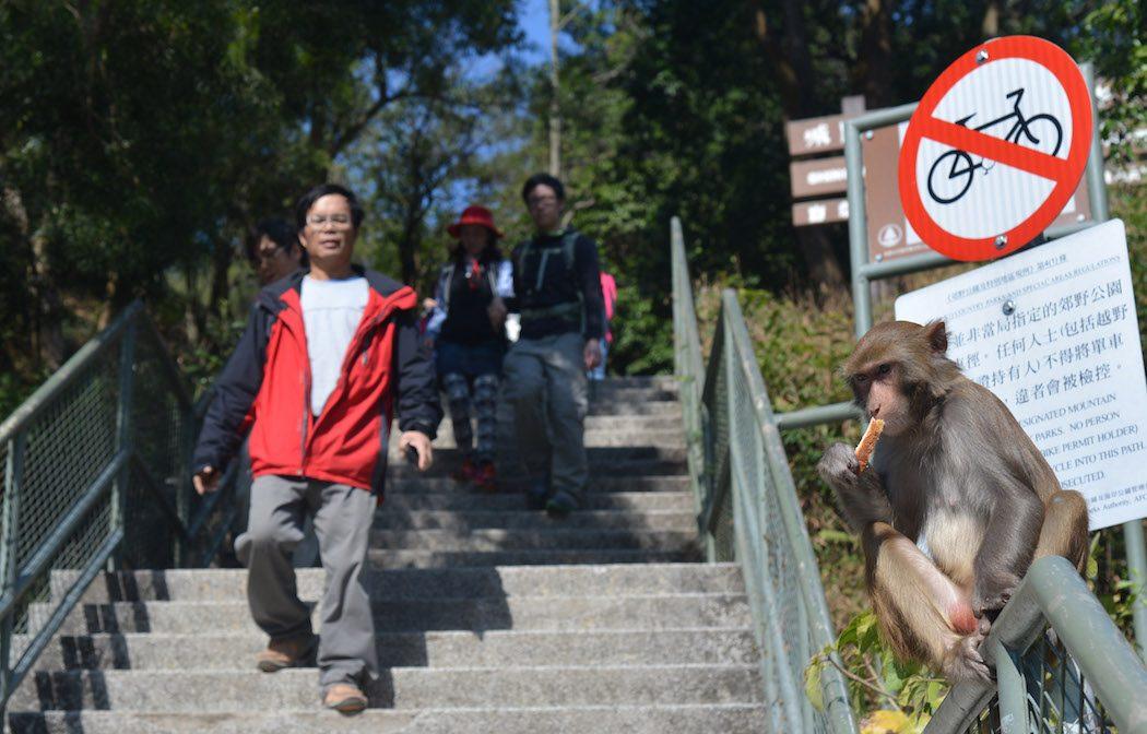 Kam Shan Country Park monkeys