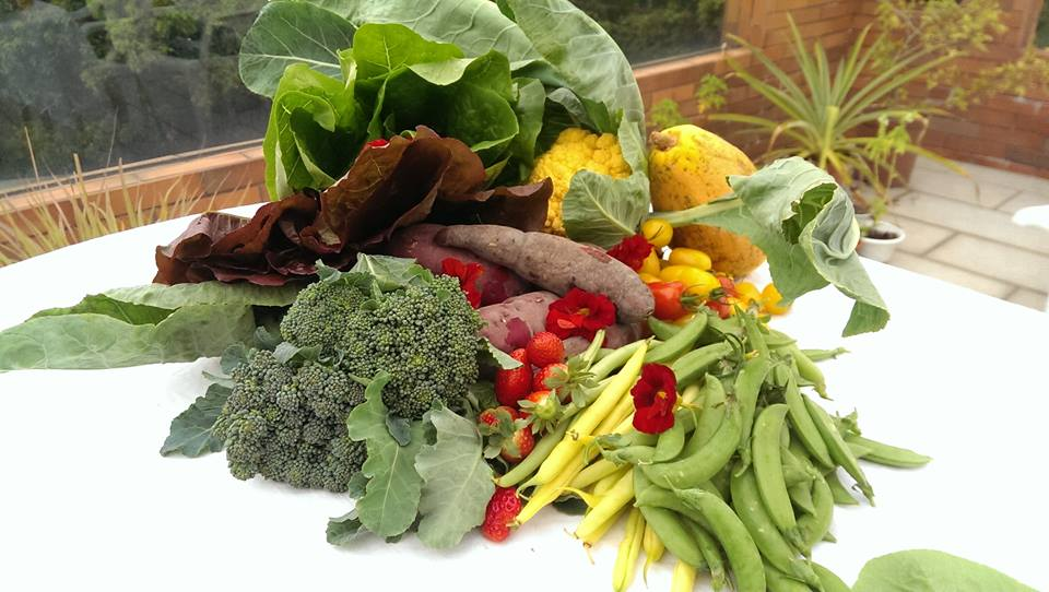 Mui Wo farm produce