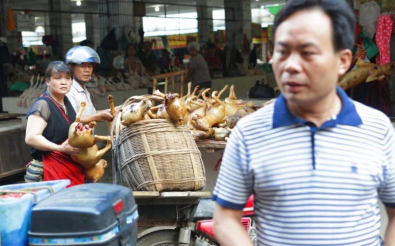 yulin dog meat