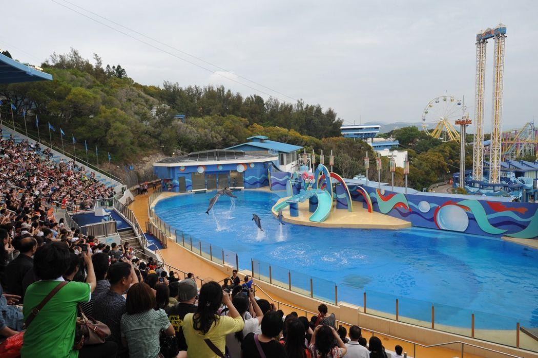 ocean park dolphins