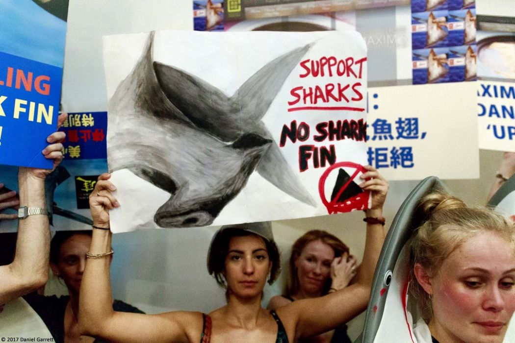 shark fin wildaid maxim protest