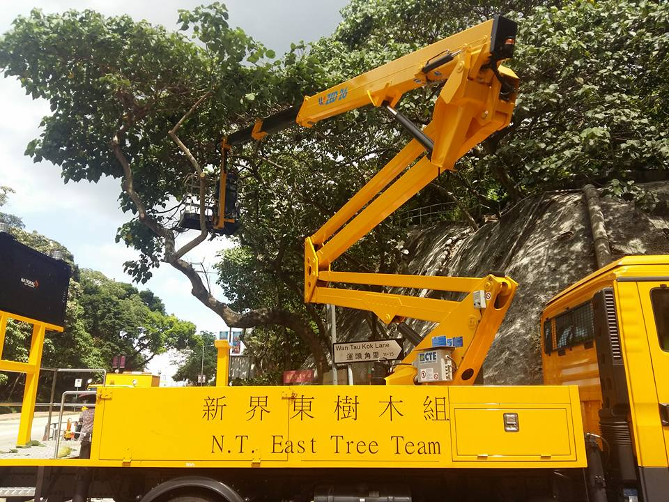 government tree team