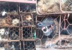 dogs guangzhou yulin