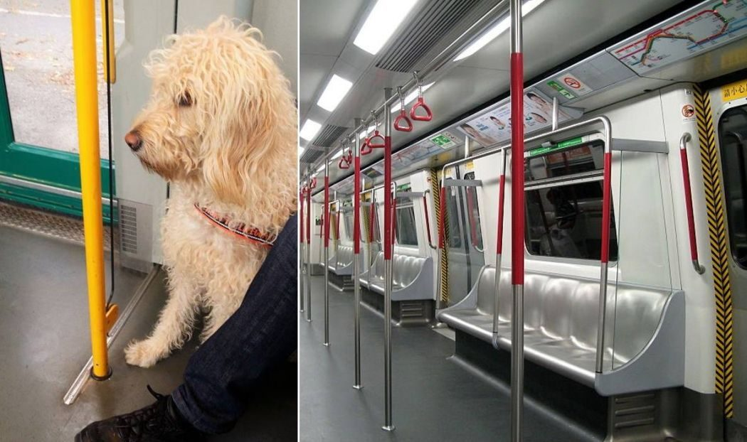 mtr pet animal dog